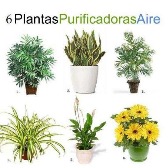 noticias Seis plantas de interior que limpian el ambiente